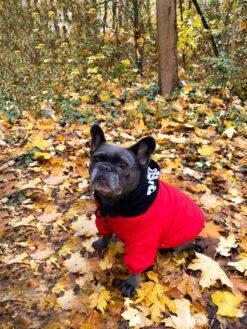 Hoodie Herbstlaub